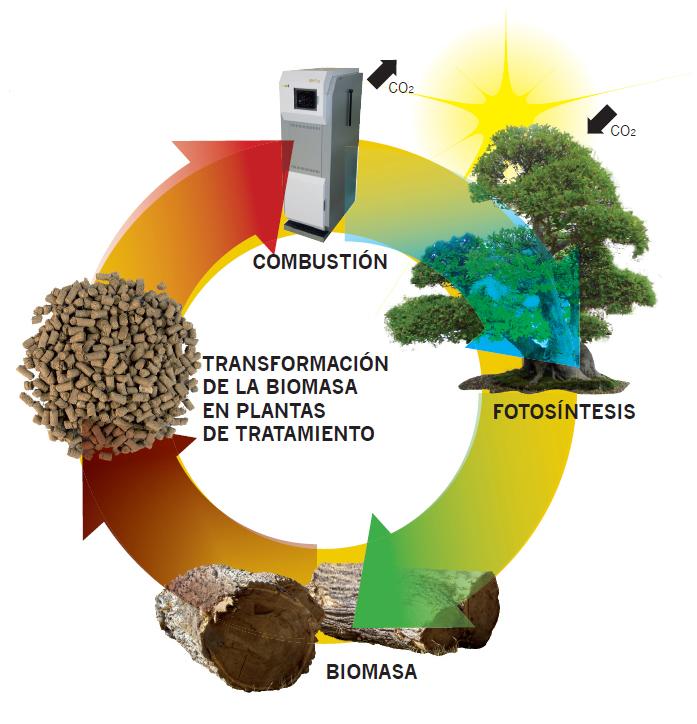 ciclo biomasa neutro co2 balence