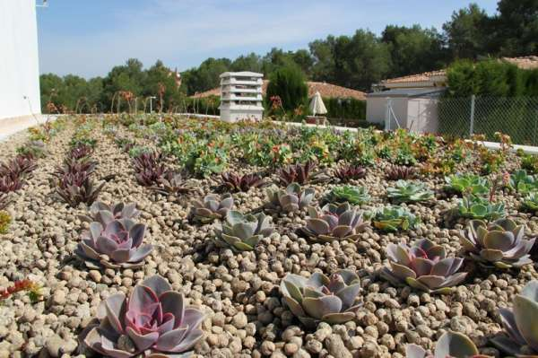 cubiertas vegetales sedum ecologica