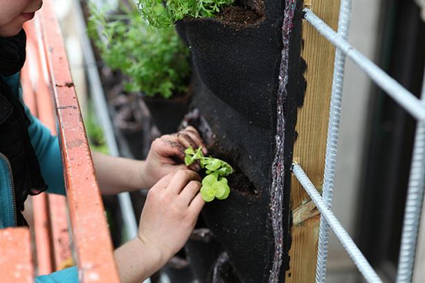 fachada vegetal elemento contenedor