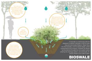 bioswale agua escorrentia erosion sostenible