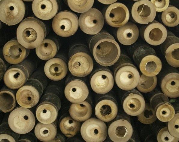 bambu construccion ecologica edificios