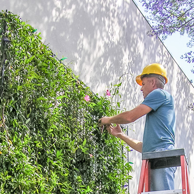 jardines verticales mantenimiento