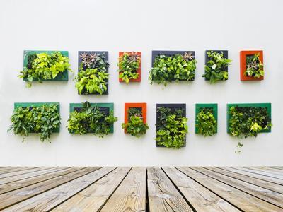 vegetacion arquitectura calidad aire